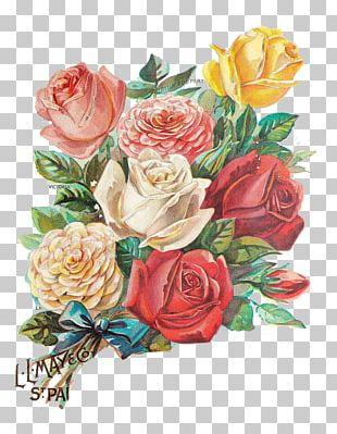 Rose Flower Illustration PNG