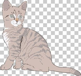 Kitten Drawing Sphynx Cat PNG