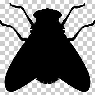 Insect Silhouette Fly Cockroach PNG