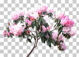 Rhododendron Woody Plant Flower White PNG