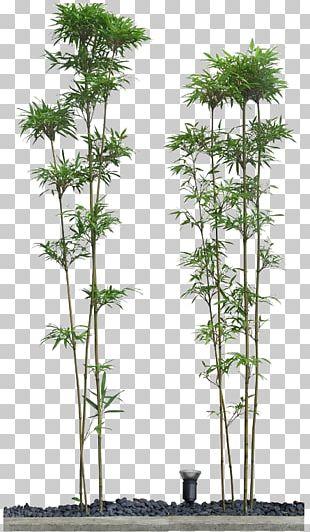 Bamboo Drawing PNG