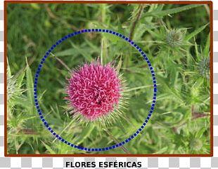 Mathematics Nature Geometry Flora Geometric Shape PNG