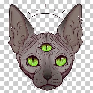 Whiskers Korat Sphynx Cat Kitten Domestic Short-haired Cat PNG