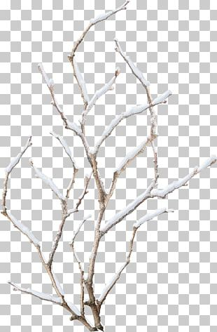 Snowflake Winter Branch PNG