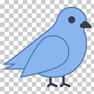 Bird Computer Icons Beak PNG