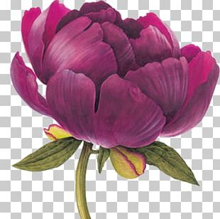 Watercolor Painting Botanical Illustration Drawing Botany PNG