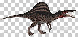 Spinosaurus Tyrannosaurus Giganotosaurus Carnivores: Dinosaur Hunter Dinosaur Size PNG