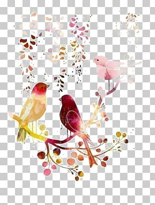 Bird Watercolor Painting Drawing Illustration PNG