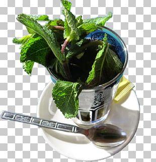 Moroccan Cuisine Maghrebi Mint Tea Spice Chinese Cuisine PNG