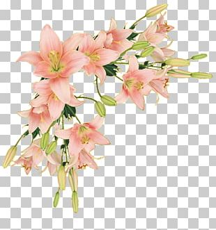Border Flowers Borders And Frames Paper PNG
