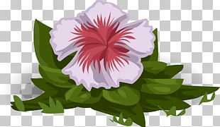 Mallows Flower Plant White PNG