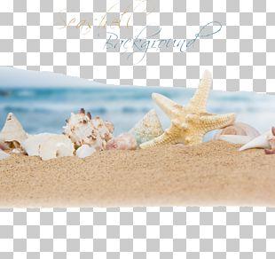 Beach Sand Ocean Seashell PNG