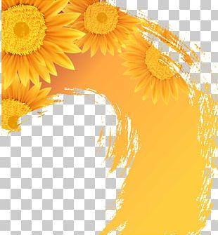 Common Sunflower Illustration PNG