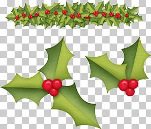 Holly Aquifoliales Christmas Ornament Fruit PNG