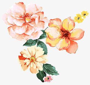Beautiful Watercolor Flower Pattern PNG