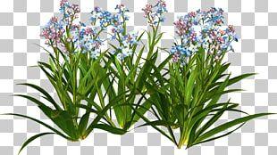 Flower Garden Plant Shrub PNG