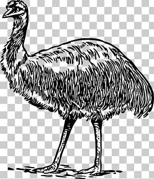 Common Ostrich Emu Galliformes Bird Beak PNG