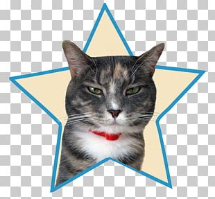 Whiskers Kitten Domestic Short-haired Cat Tabby Cat PNG