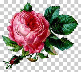 Flower Vintage Clothing Garden Roses PNG
