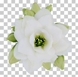 Cut Flowers Flower Bouquet Rose Family PNG