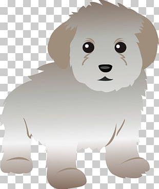 Toy Poodle Maltese Dog Standard Poodle Miniature Poodle PNG