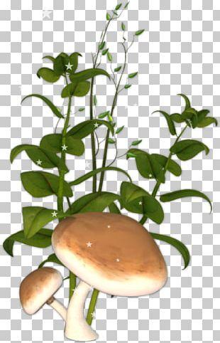 Plant Stem Flowerpot PNG