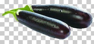 Eggplant Vegetable Seed Bonsai PNG