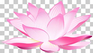 Nelumbo Nucifera Pink Petal PNG