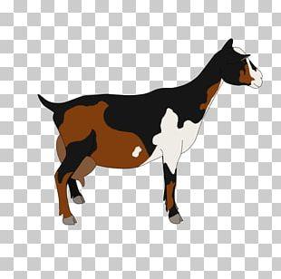 Nigerian Dwarf Goat Pygmy Goat Cattle Drawing Caprinae PNG