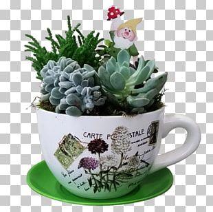 Flower Cactaceae Succulent Plant Echinocactus PNG