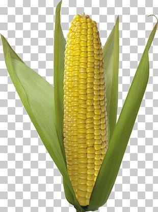 Corn On The Cob Flint Corn Vegetarian Cuisine Sweet Corn Corn Kernel PNG