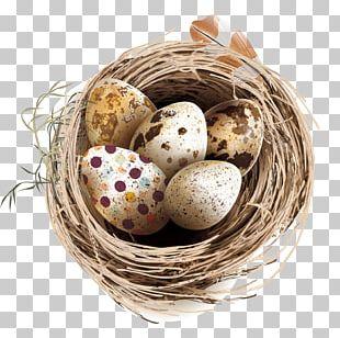 Quail Eggs Bird Nest PNG