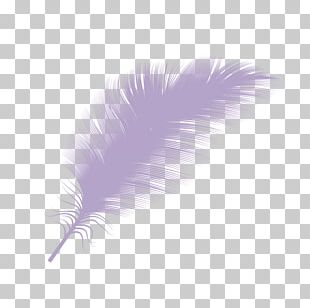 Down Feather Goose PNG