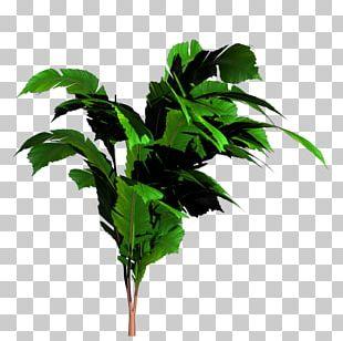 Banana Tree PNG