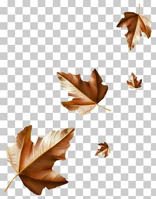 Maple Leaf Autumn Leaflet Rain PNG