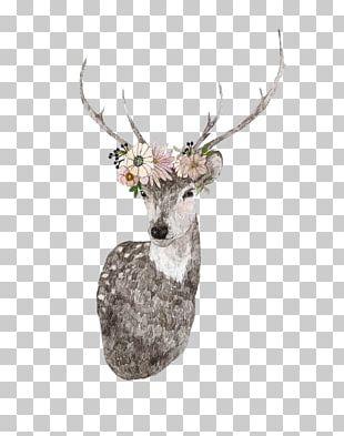 Deer Drawing Moose Elk Illustration PNG