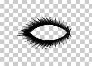 Cosmetics Eyelash Extensions Eye Shadow PNG