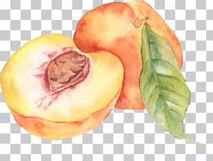Watercolor Painting Peach Drawing PNG