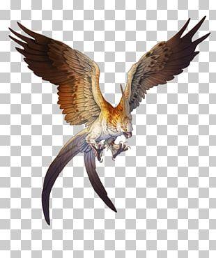 Hawk Golden Eagle Bird Bald Eagle PNG