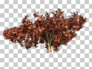 Japanese Maple Twig Red Maple Tree PNG