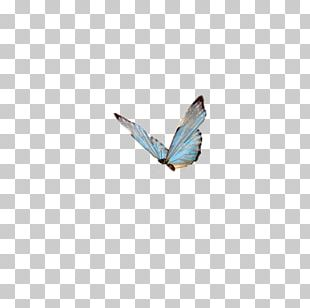 Papillon Dog Butterfly Insect High-definition Television PNG