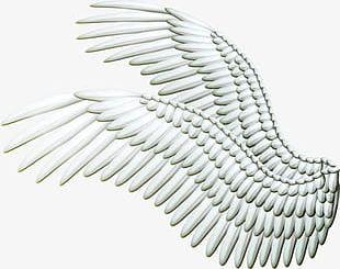 Angel Wings PNG