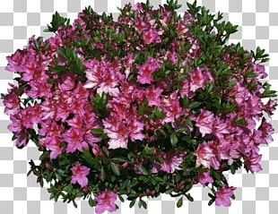 Garden Shrub PNG