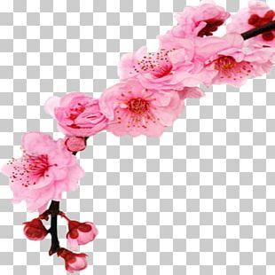 Cherry Blossom Floral Design Flower PNG