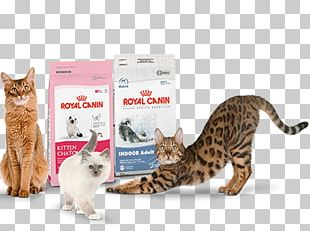 Dog Cat Food Persian Cat Royal Canin Veterinarian PNG