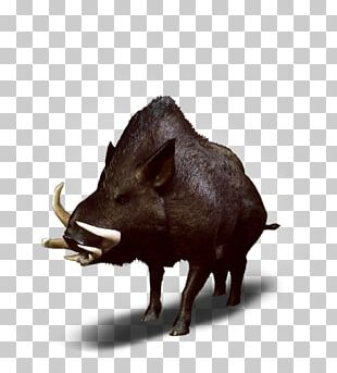 Wild Boar The Witcher 3: Wild Hunt Peccary Wiedźmin PNG