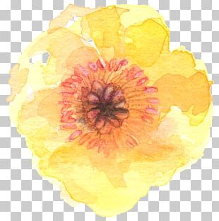 Flower Watercolor Painting Yellow PNG