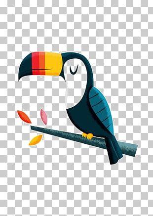 Bird Parrot Toucan Macaw PNG