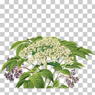 Elderflower Cordial Herbal Tea PNG