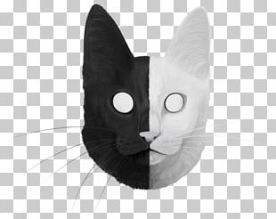 Whiskers Cat Black White Snout PNG